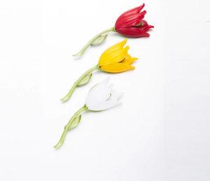 Значение тюльпана