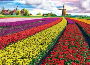 в какой зоне растут тюльпаны