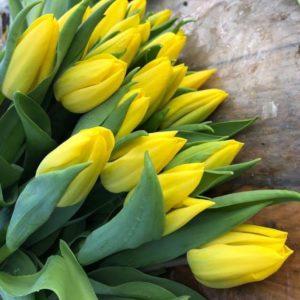 Луковицы тюльпана Стронг Голд